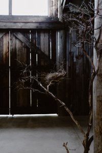 Good Neighbours - Tanglewood-15